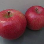 りんご狩りに行ってきました🍎